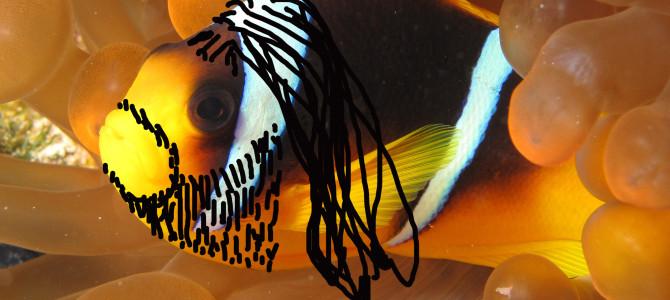 Clownfische im Freudentaumel – dank Conchita Wurst!