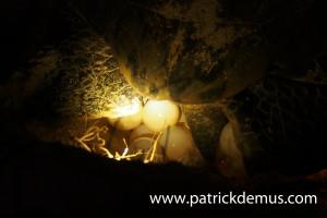 close up egg chamber